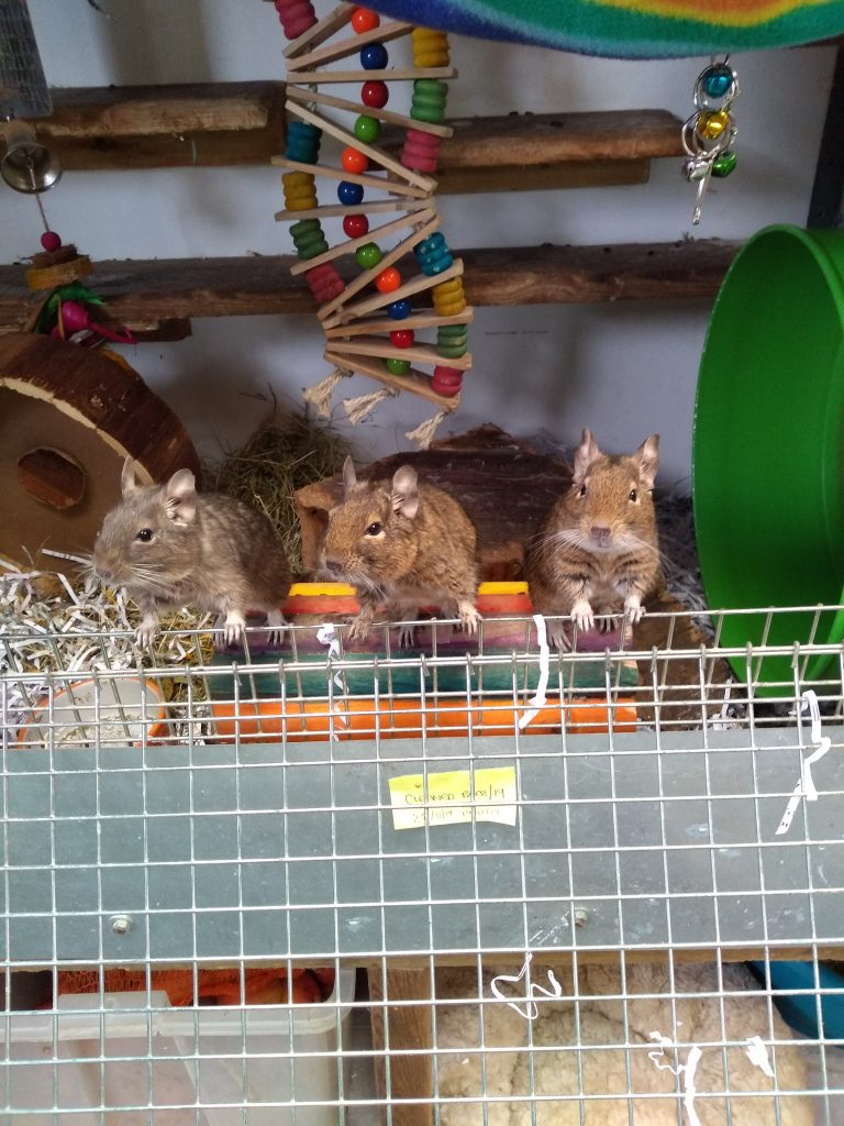 Whiskers, Ceaser & Felix